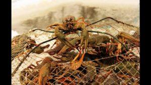 Зимняя ловля раков — Дневник рыболова