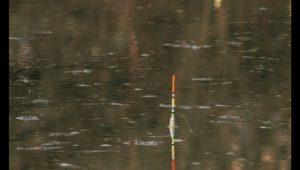 Ловля карася на поплавок весной - Рыбалка 68