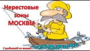 Нерестовые зоны Москвы - Рыбацкие зарисовки