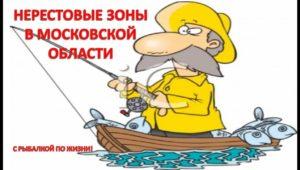 Нерестовые зоны в Московской области - Рыбацкие зарисовки