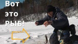 Хариус на озере - Болен рыбалкой