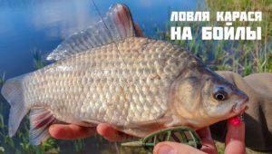 Ловля карася на бойлы — Рыболовный дневник
