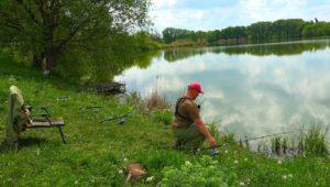 Пошел жор зачетных карасей на донные снасти - Клуб рыбаков