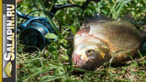 Рыбалка с фидером на Москва-реке в июне - Салапин