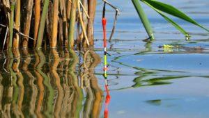 Зачетная ловля крупного карася на поплавочную удочку с мормышкой - Клуб рыбаков