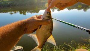 Лещ на поплавок - Клуб рыбаков