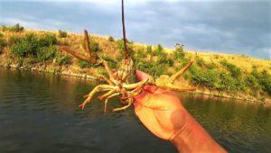 Ловля раков на примитивные приманки — Дневник рыболова