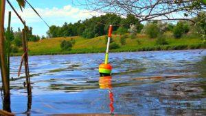 Ловля толстолобика на поплавок - Клуб рыбаков