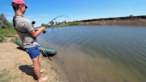 Сазан и крупный карась на жмых - Рыбалка 68