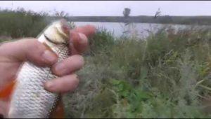 Деревенская рыбалка — Рыбалка моими глазами