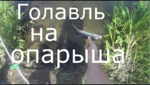 Голавль на опарыша — Рыбалка моими глазами