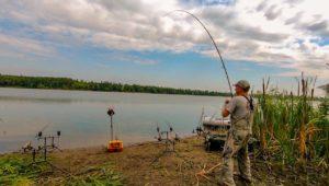 Карпы клюют один за другим — Клуб рыбаков