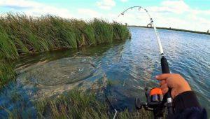 Ловля на жмых — Дневник рыболова