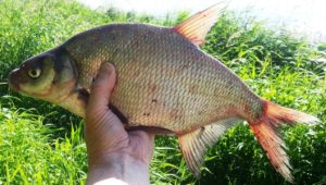 Отличная рыбалка на фидер в сентябре