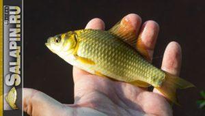 Рыбалка на поплавочную удочку на деревенском пруду - Салапин