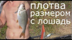 Ловля плотвы на фидер — Рыбалка моими глазами