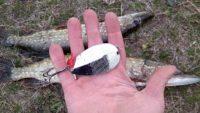 Переставил крючок и блесна заработала! — Рыбалка на реке