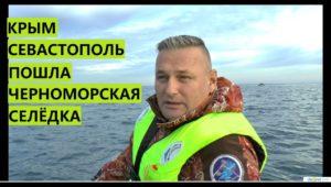 В Крыму пошла селедка!