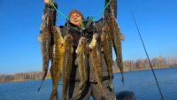 Крупный зимний судак с каждого заброса - Клуб рыбаков