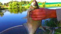 Рыбалка на  Пахре до отравления - Рыбалка с Пашком