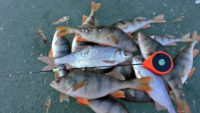 Зимняя рыбалка на озере - Рыбалка 68