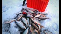 Ловля плотвы на безмотылку - Рыбалка 62