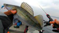 Лучшие народные балансиры на судака — Клуб рыбаков
