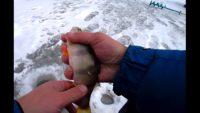 Плотва на безмотылку и окунь на балансир - Рыбалка 62