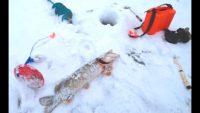 Щука и налим на жерлицы - Рыбалка 62