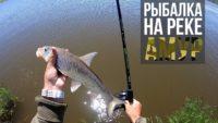 Ловля сазана и коня на реке Амур — Рыболовный дневник