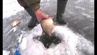 Первый и последний лёд на Оке 2020 года - Рыбалка 62