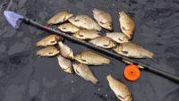 Карась в камыше - Клуб рыбаков