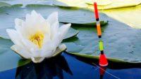 Самые лучшие и эффективные натуральные ароматизаторы для рыбалки