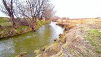 Крупный голавль ранней весной на малой реке
