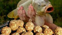Самые лучшие самодельные прикормки для мирной рыбы
