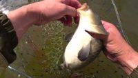 Ловим карпа — Рыбачим сами