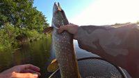 Рыбалка на утренней зорьке - Рыбалка 68