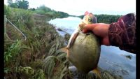 Лещ на пенопласт - Рыбалка 62