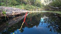 Утренняя ловля карпа и карася на поплавок - Рыбалка 68