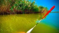 Ловля белого амура на поплавок — NRG FISHING