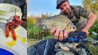 Ловля карася в преддверии осени на фидер - Рыболовный дневник