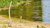 Ловля карпа на донку резинку - Клуб рыбаков