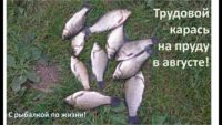 Трудовой карась на пруду в августе — С рыбалкой по жизни!
