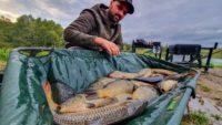 Успешная ловля карпа на платнике — Рыболовный дневник