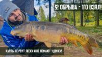 Flat Feeder. Часть 2. Как мы соблазняли огромного карпа на поклевку — Рыболовный дневник