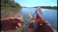 Рыбалка на воблеры в сентябре - Рыбалка 62