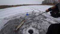 Ловля щуки на жерлицы зимой. Рыбалка на балансир - Рыбалка 68