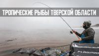 Зимний фидер по открытой воде в минус 10 — Рыболовный дневник