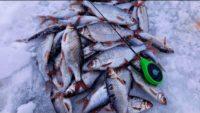 Ловля плотвы зимой на реке - Рыбалка 68