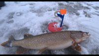 Ловля щуки на жерлицы 2021 - Рыбалка 62